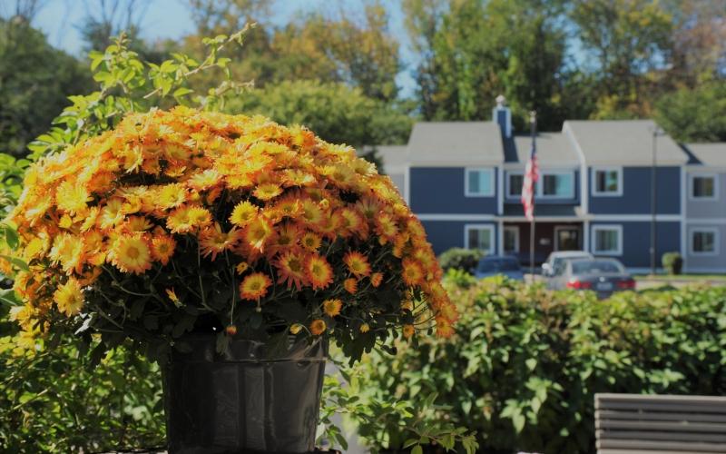 Cherry Hill flowers