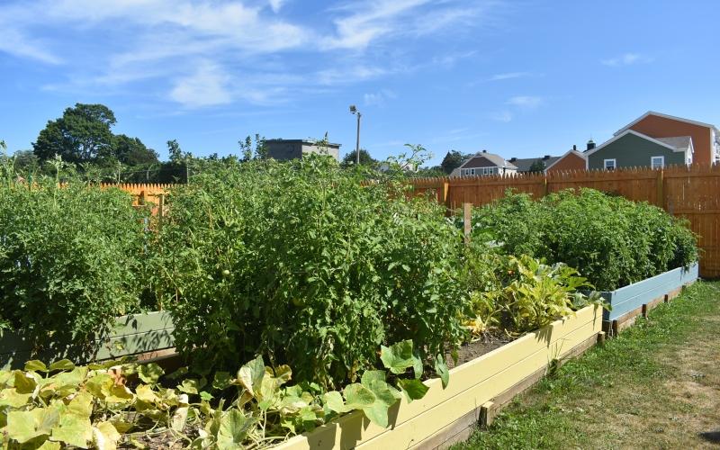 Temple Landing community garden