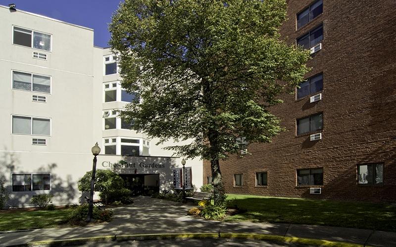 Chestnut Gardens tree